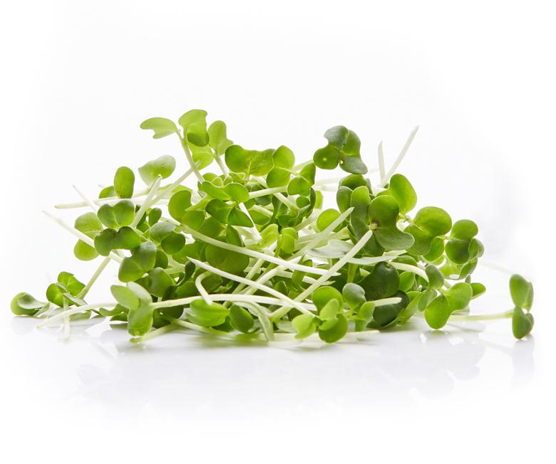 broccoli_boven