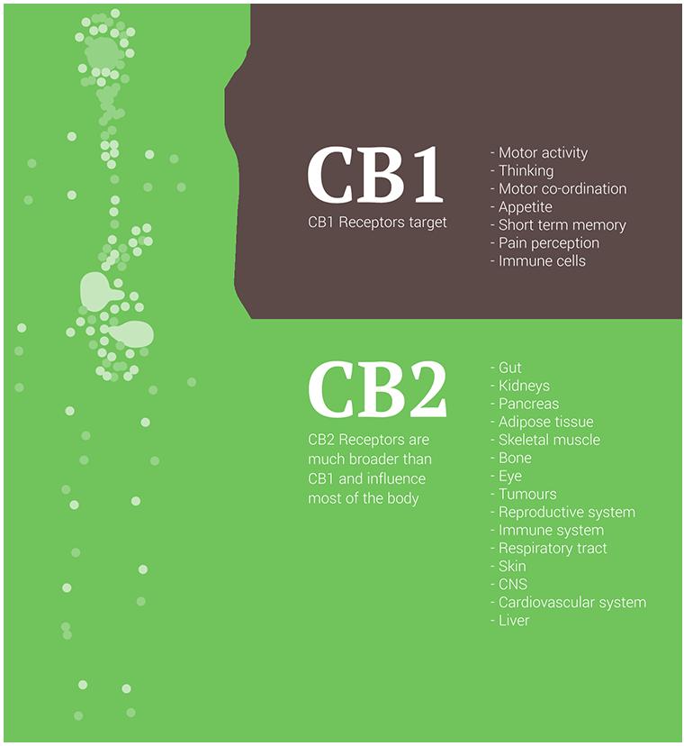 cb1+2